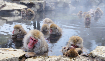 critters-pests-in-hot-tub